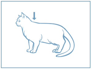 is completely empty, as shown in the diagram below  avoid superficial  application to the cat's hair  do not get the product in your cat's eyes or  mouth